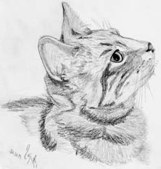 Katze Zeichnung