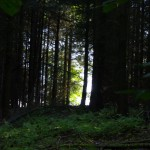 Lichtschneise im Wald