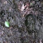 Spuren im Matsch