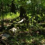 mehr Lichteffekte im Wald