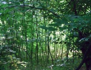 im Bad Vilbeler Wald