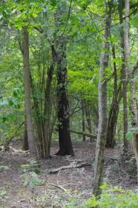 Stock im Wald