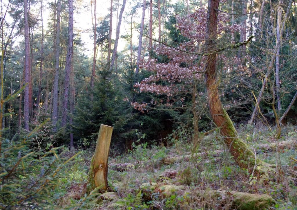 Wald mit Novemberrestfarben