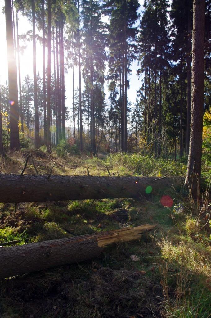 21-Baum-im-Weg
