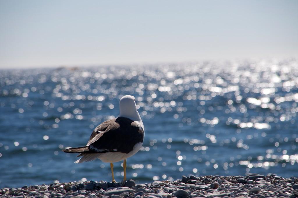 Möwe blickt auf die Nordsee bei Helgoland
