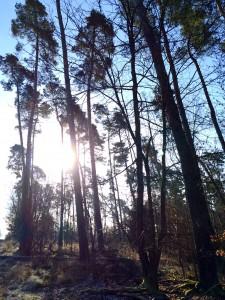 Morgensonnenschein am Waldesrand