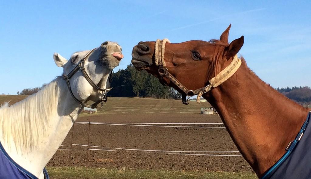 Pferde kabbeln sich
