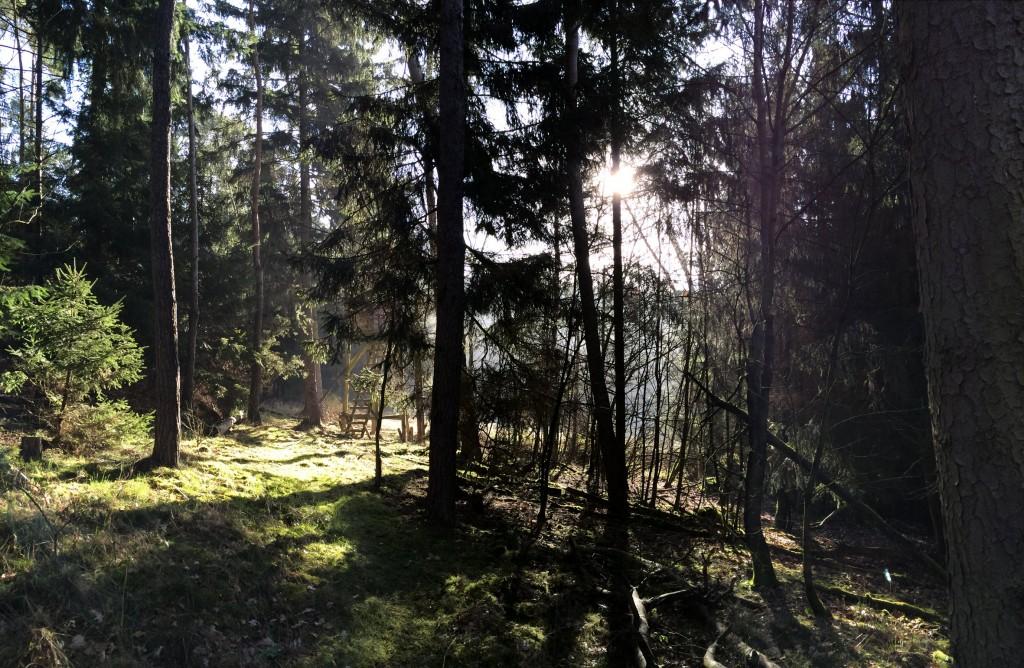 Hochsitz an einer Lichtung im Wald