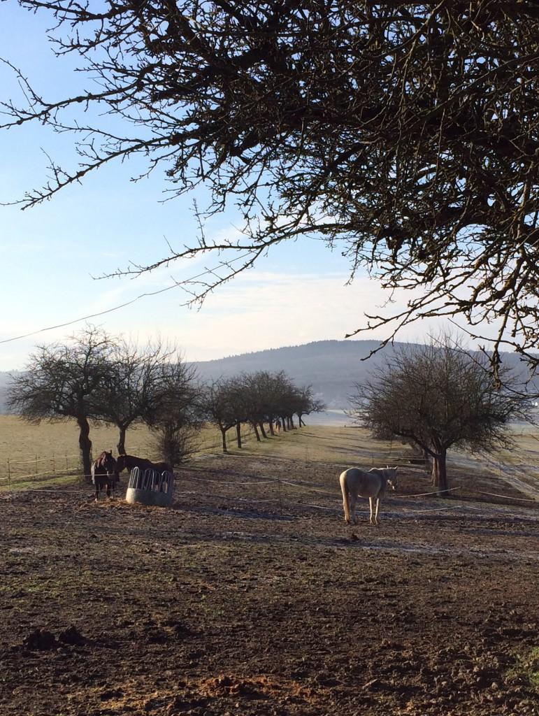 Morgenruhe bei den Pferden.