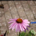 Schmetterling fliegt weg