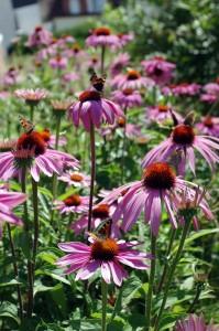 viele Schmetterlinge im Garten